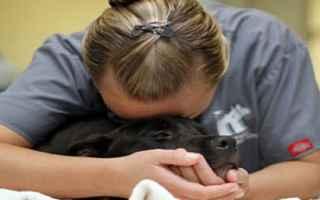 Animali: veterinari  suicidi  cani  gatti