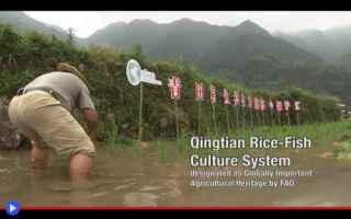 https://diggita.com/modules/auto_thumb/2019/03/11/1636080_Qingtian-Rice-Fish-System-500x313_thumb.jpg
