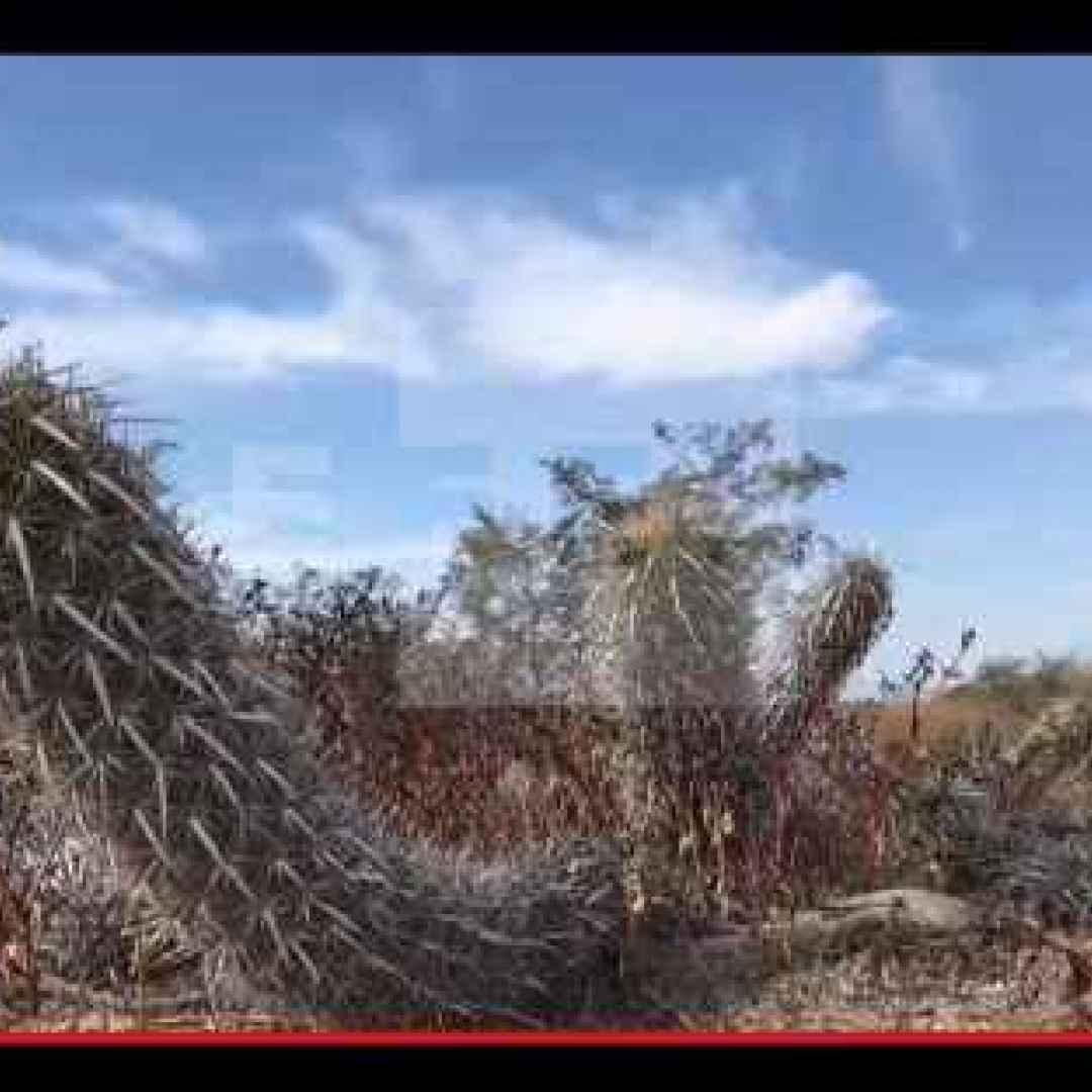 piante  cactus  messico  deserto  strano