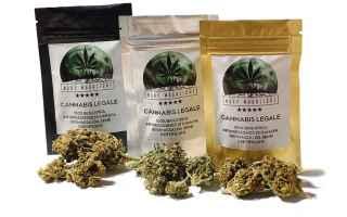 https://diggita.com/modules/auto_thumb/2019/03/22/1636862_marijuana-light-legale-ora-davvero-dal-governo-commercio-e-produzione-riconosciuti_thumb.jpg