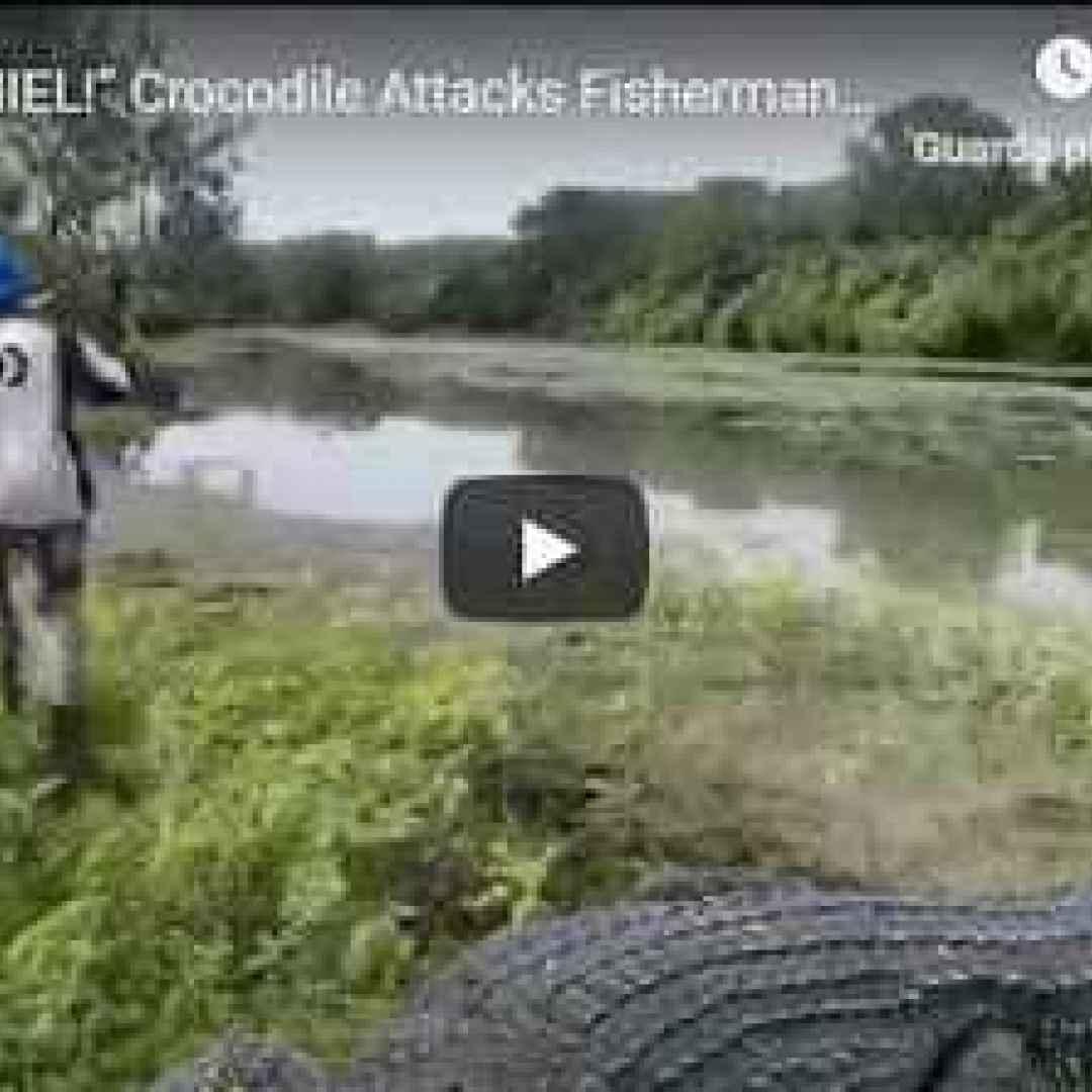 australia pesca coccodrillo fiume video