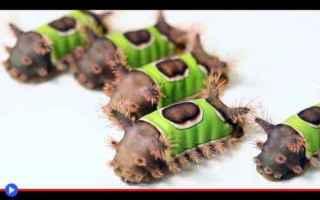 Animali: animali  insetti  bruchi  falene