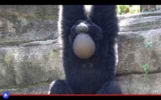 Animali: animali  scimmie  primati  famiglie