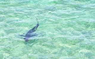 Palermo: avvistamento squalo  squalo palermo