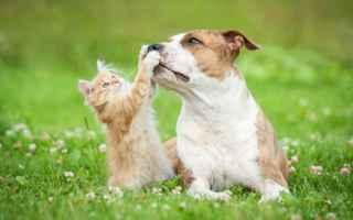 Animali: cane  gatto  convivenza