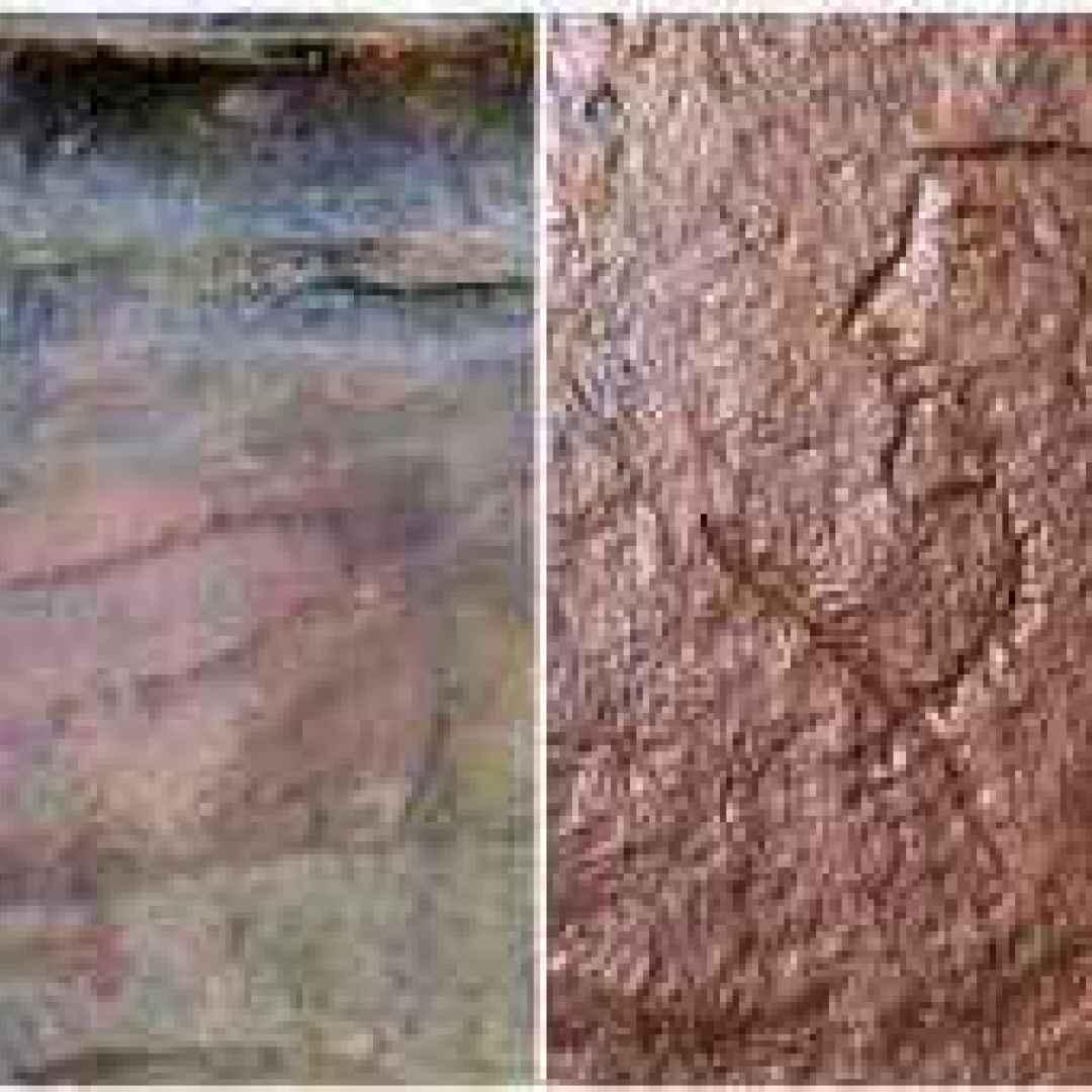 pene romano inciso  antica roma