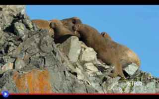 Ambiente: animali  natura  disastri  siberia