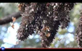 Animali: insetti  animali  farfalle  stati uniti