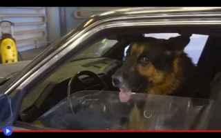 Automobili: animali  curiosità  guida  scherzi