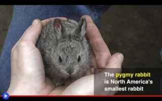 Animali: animali  conservazione  ambiente  natura