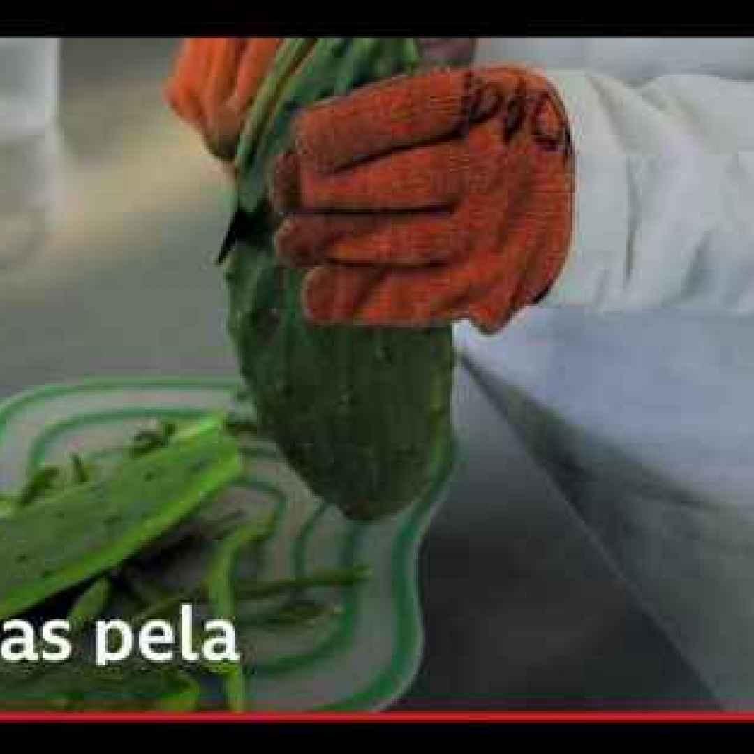 tecnologia  polimeri  plastica  messico