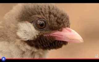 Animali: animali  uccelli  africa  popoli