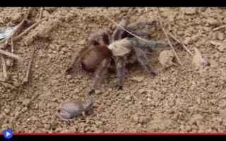 Animali: animali  insetti  anfibi  rettili  preda