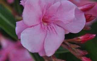 Giardinaggio: piante  fiori  giardino  casa  balcone