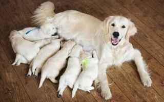 Animali: cane  gravidanza  fertilità