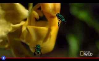 Ambiente: piante  fiori  api  insetti  sudamerica