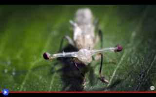 Animali: animali  insetti  artropodi  ditteri