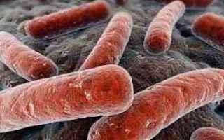 tubercolosi  malattie-infettive