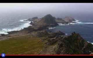 Storia: storia  uccelli  isole  animali  caccia