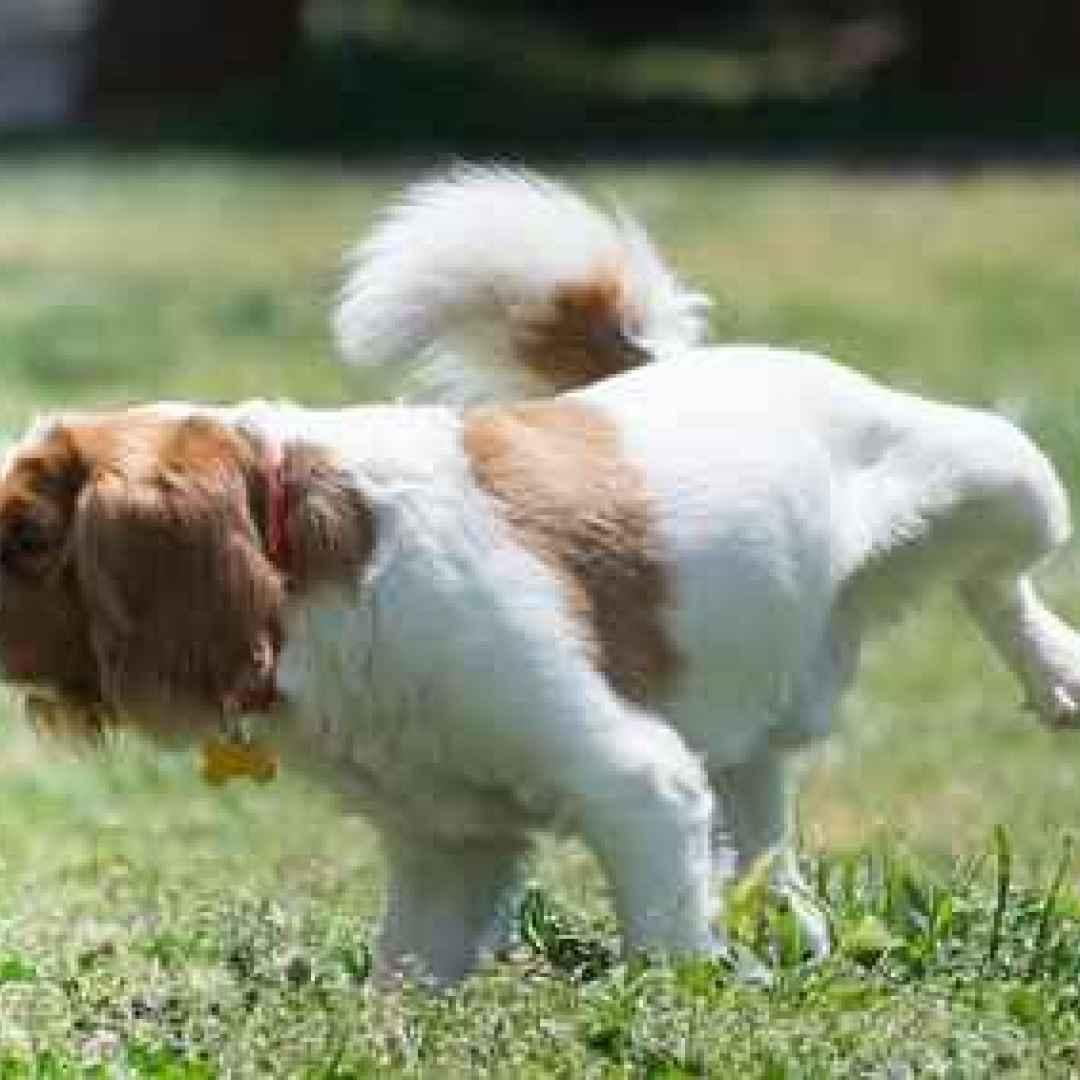 cane  addestramento  traversine