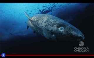 Animali: squali  animali  condritti  scienza