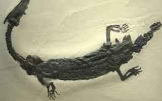 lago di como  lariosauro  mostro