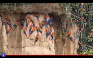 Animali: animali  uccelli  pappagalli  sudamerica