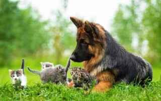 Animali: allergia cane  dieta ad esclusione