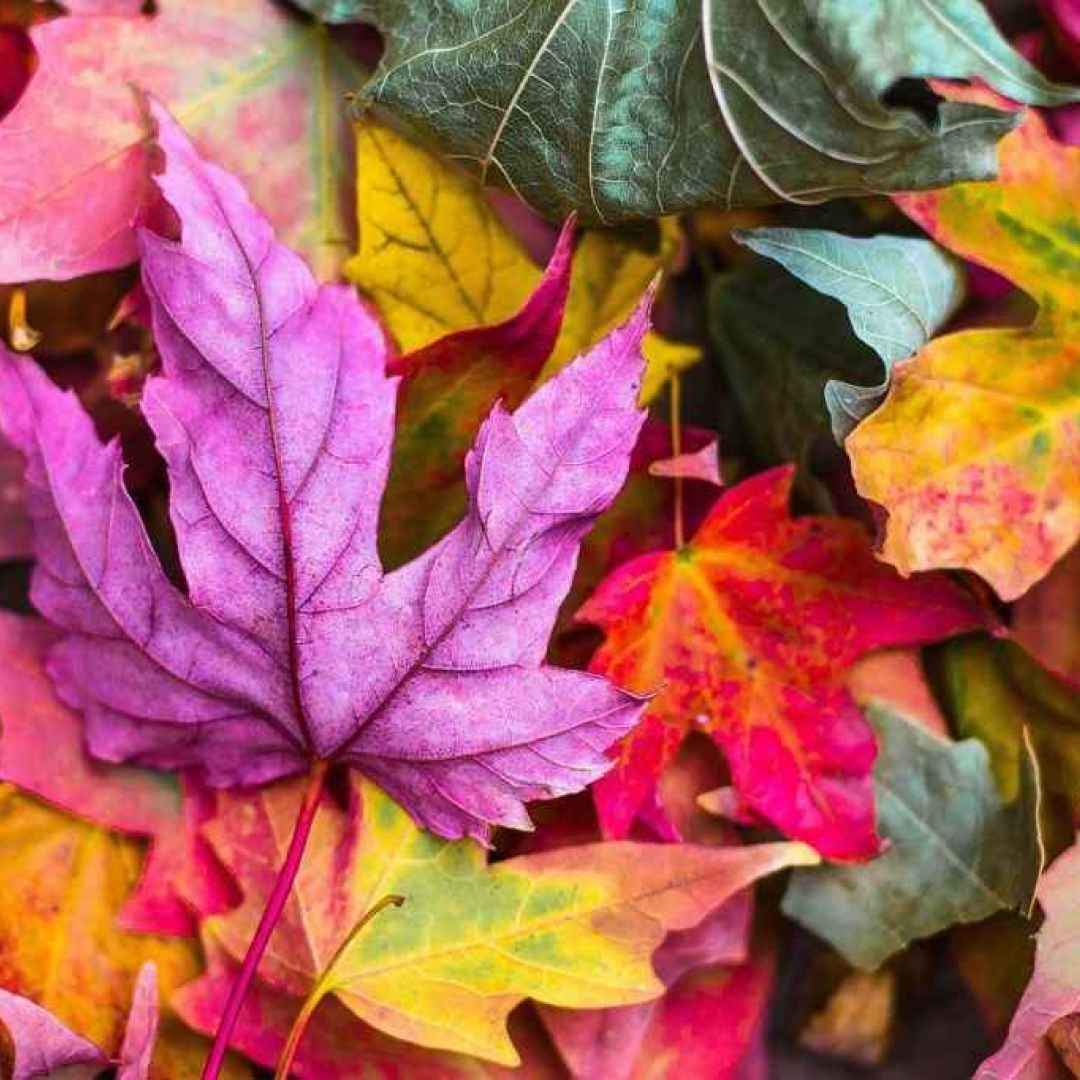 equinozio d'autunno  mabon  proserpina