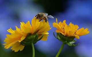 Cultura: api  greca  mitologia  antico egitto