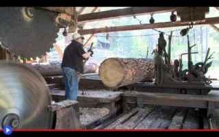 Tecnologie: foresta  tronchi  legname  energia