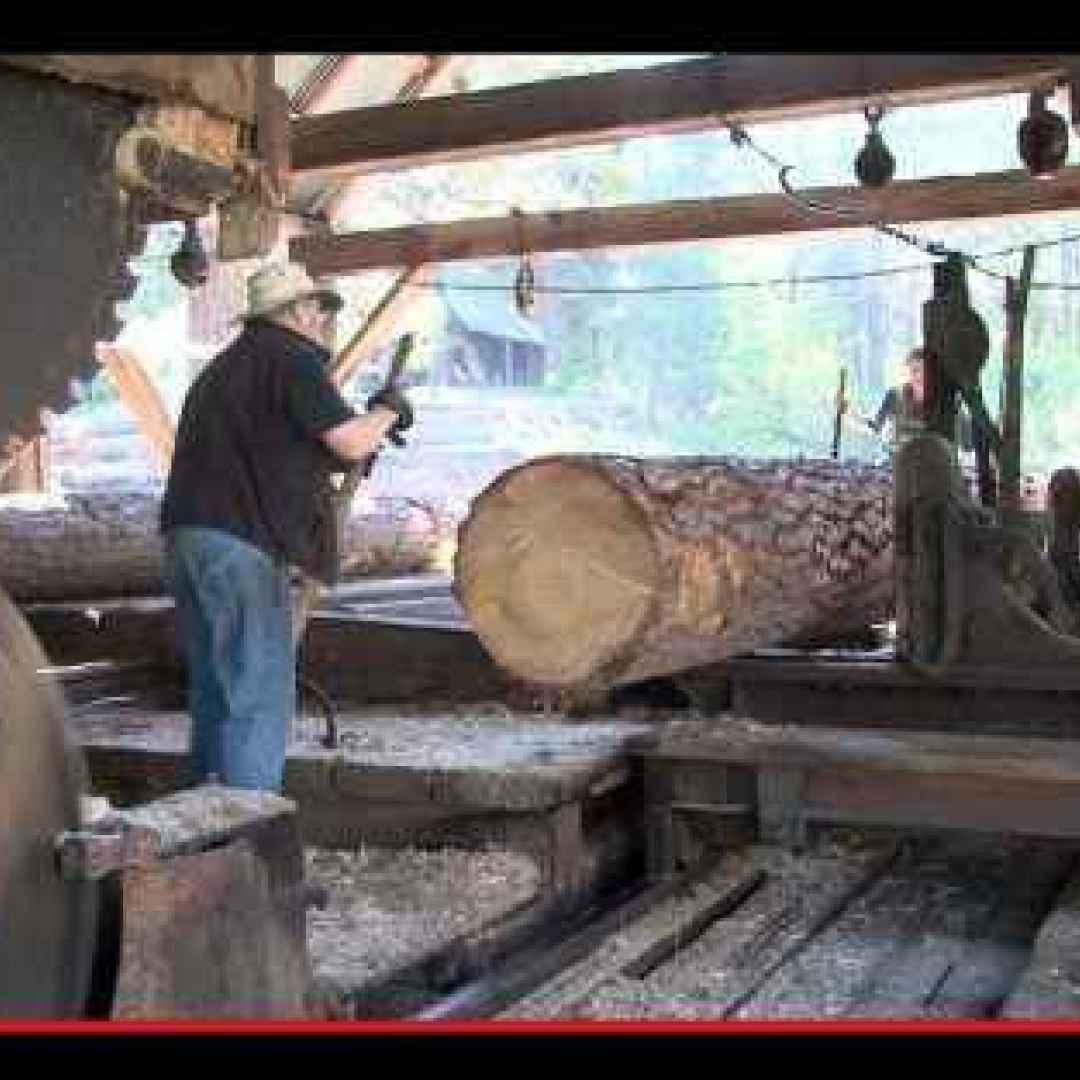 foresta  tronchi  legname  energia