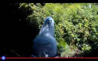 Animali: animali  uccelli  pulcini  riproduzione