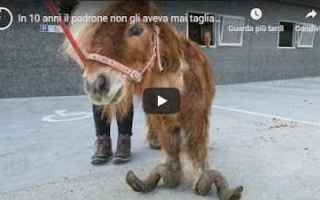 Animali: video shock animali video virale