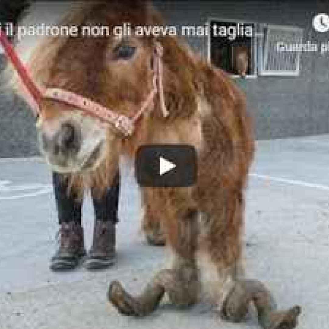 video shock animali video virale