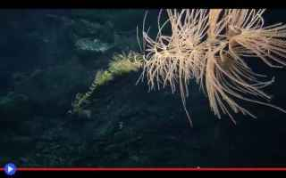 Animali: animali  coralli  creature  cnidaria