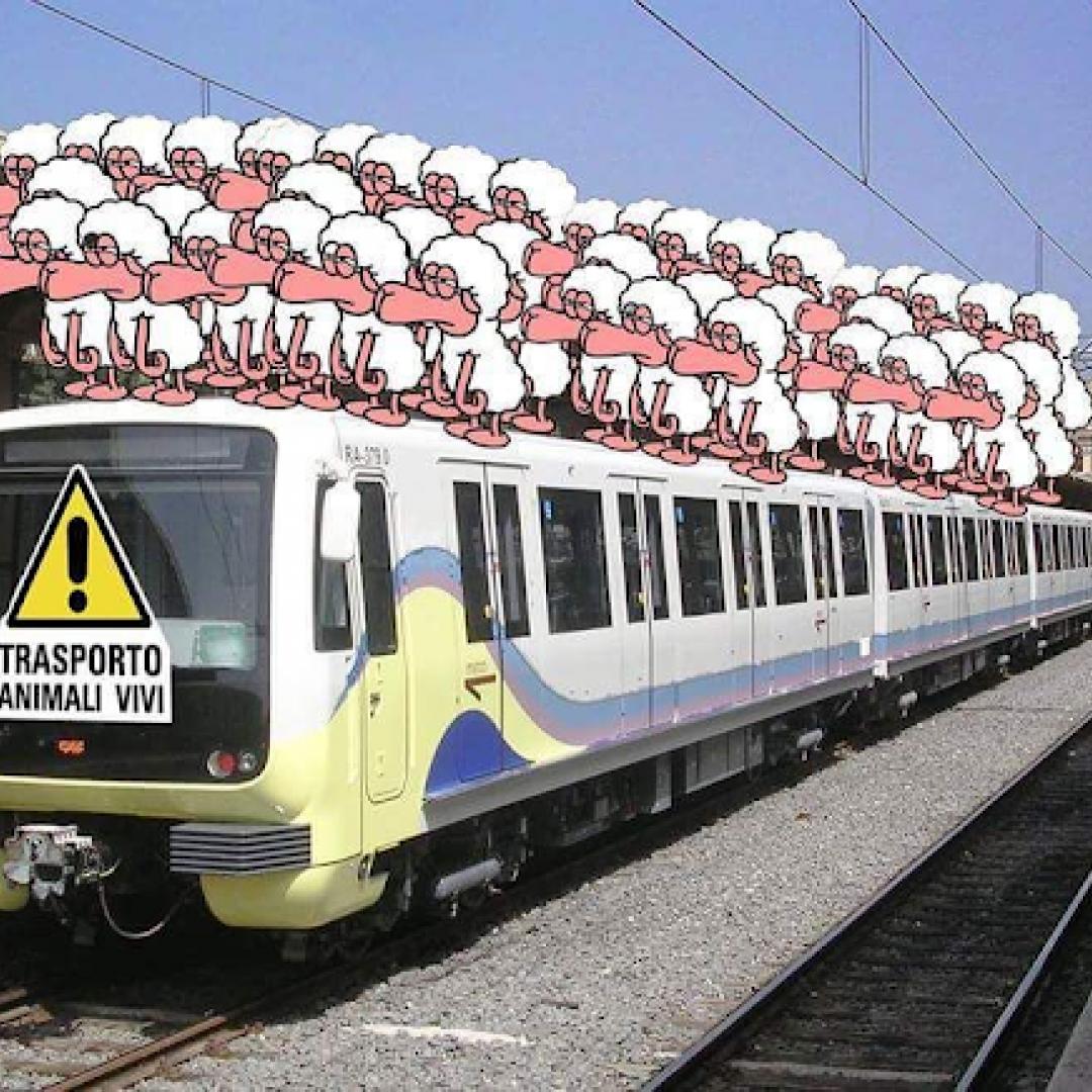 atac  roma  trasporto pubblico  romalido