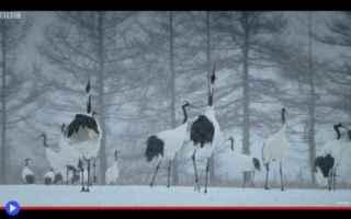 Animali: animali  uccelli  asia  giappone  cina