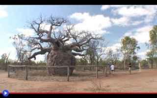 Ambiente: piante  alberi  australia  kimberly