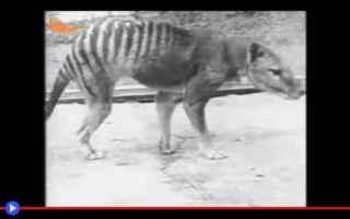 Animali: animali  creatura  estinzione  criptidi