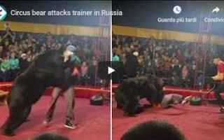 dal Mondo: orso circo russia video shock