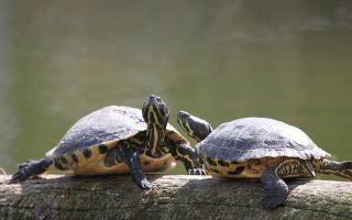 Animali: tartarughe  allevamento