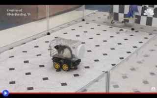 dal Mondo: animali  topi  esperimenti  scienza