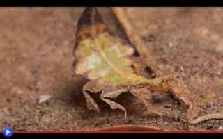 Animali: animali  insetti  foglie  mimetismo