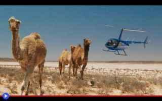 dal Mondo: animali  australia  caccia  ambiente