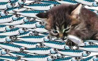 Politica: salvini  sardine  mes  rousseau  gattini