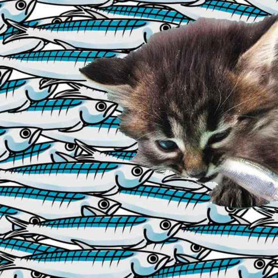 salvini  sardine  mes  rousseau  gattini