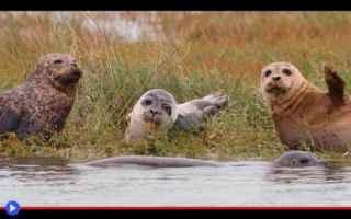 animali  creature  natura  ambiente