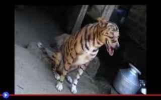 animali  india  inganno  stratagemmi