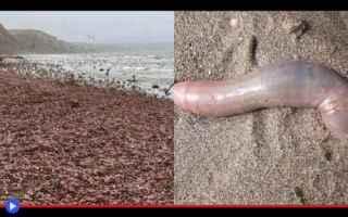 dal Mondo: animali  vermi  pesci  strano  usa